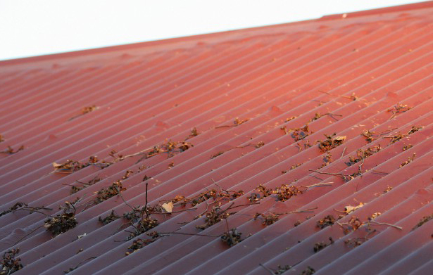 Roof Cleaning - The Why, The When, and The How